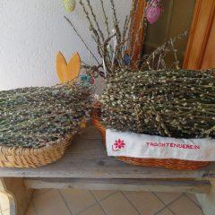 Palmkätzchen zur Selbstentnahme
