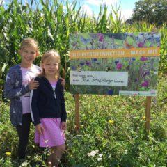 Blühstreifenanbau erfreut Bienen und Autofahrer
